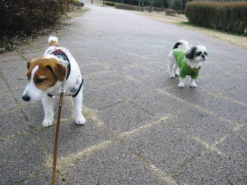 2011長岡公園173