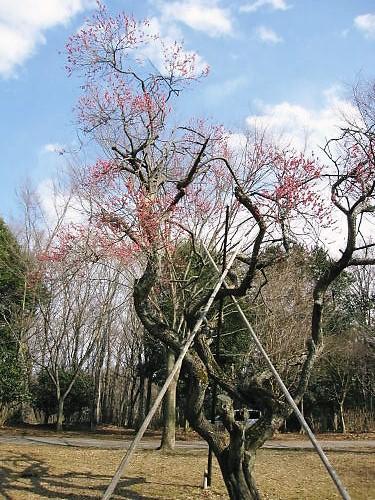 2011草木花010