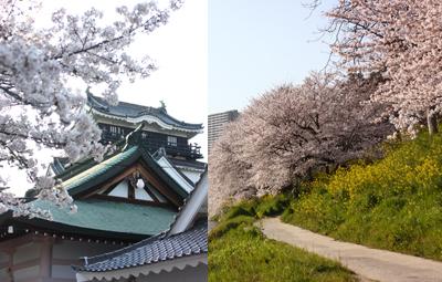 okazakihanami20104