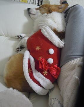 サンタからのクリスマスプレゼント