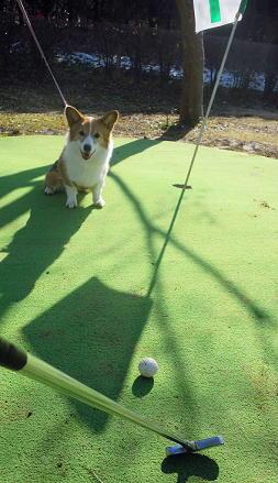 初のパターゴルフ