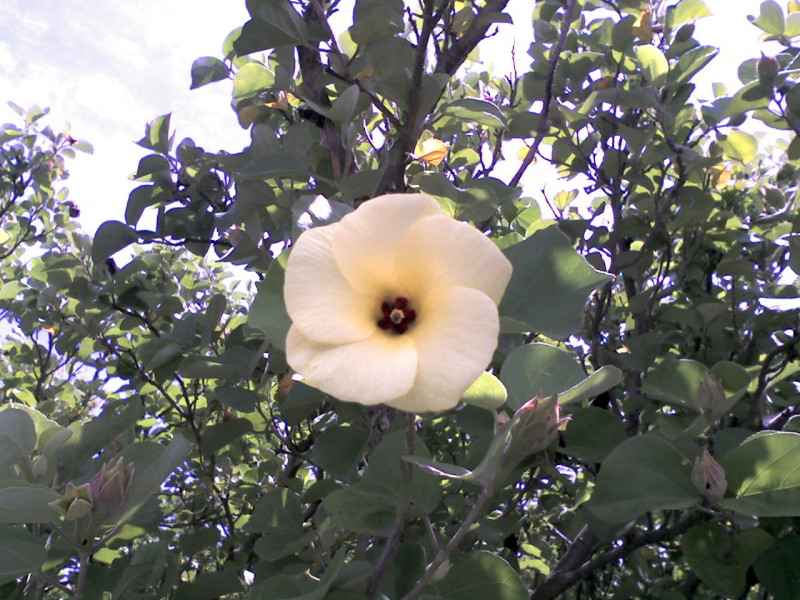 葛西臨海公園:花
