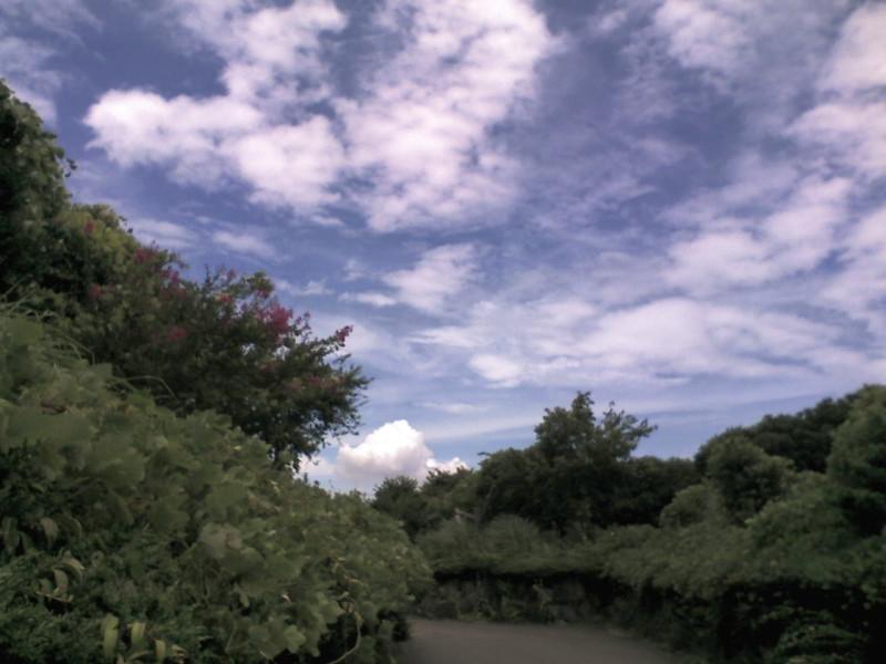 葛西臨海公園:空