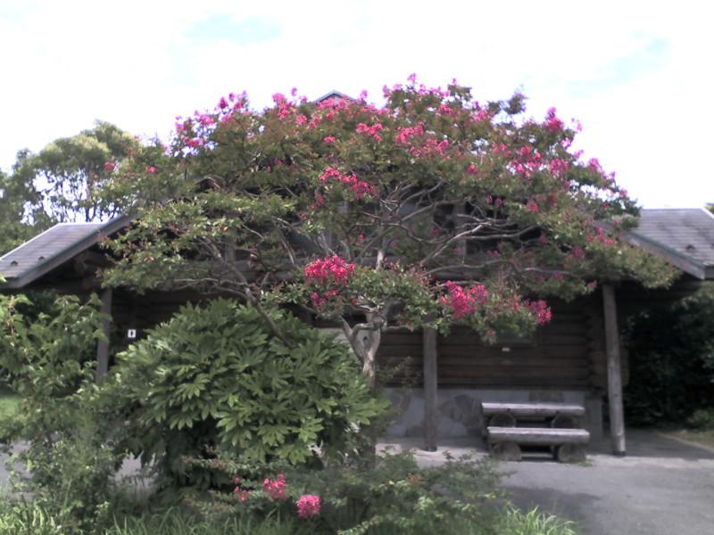 葛西臨海公園:休憩所