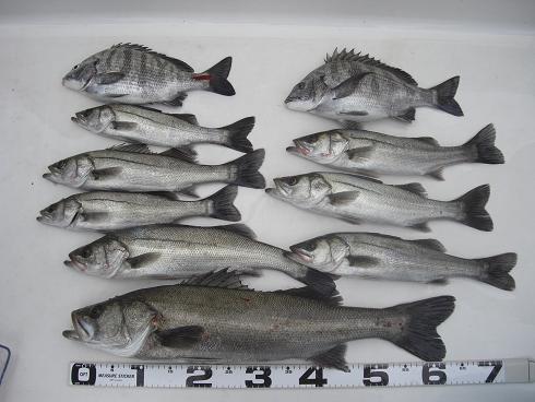 20100307釣果