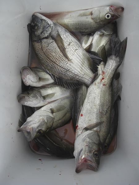 20100912釣果