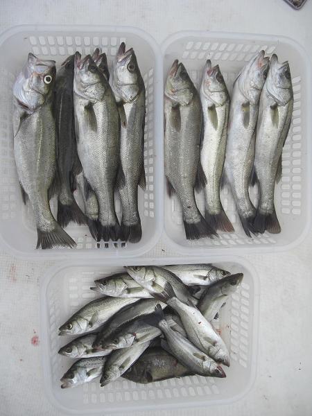 20100920釣果