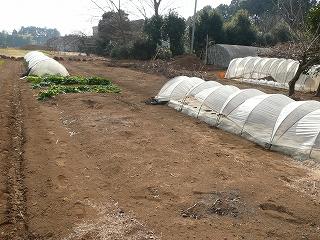 整備前の家庭用菜園