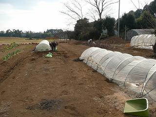 草取り中の家庭用菜園
