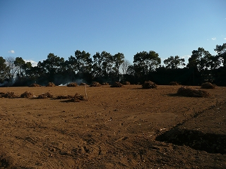 人参の木を集め終えた畑