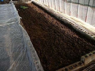 掘り起こした後の温床