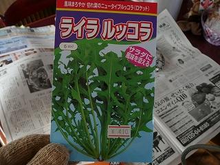 ライラルッコラ(410円)