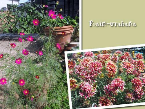 花色が鮮やかな季節です♪
