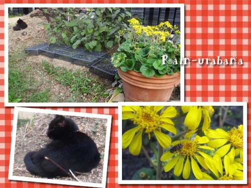 ツワブキが花盛り♪