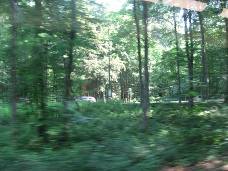 木々の中を走る
