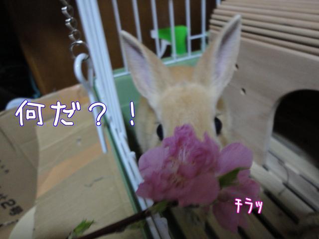 ghjk (7)