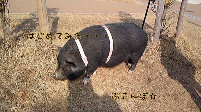 uda+(18)_convert_20100221215234.jpg