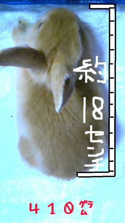 yVxvNZlE_convert_20100128204819.jpg