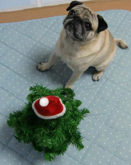 メリークリスマス!チッチ君