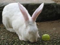 強奪ウサギ