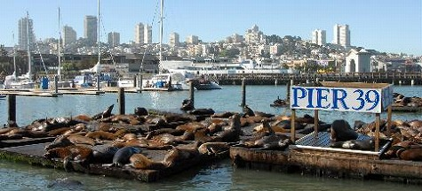 san-francisco-sea-lions-pier-39-17433[1]
