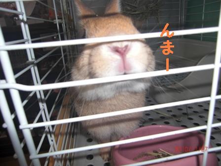 CIMG5643_20101127110342.jpg