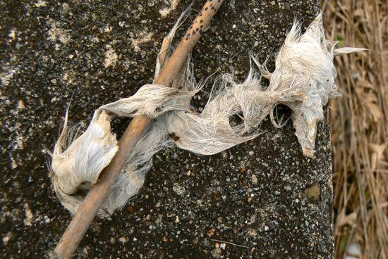 100307 ウサギの毛