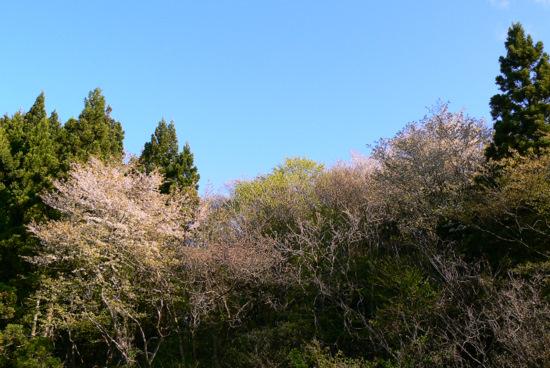 100509 梵字川対岸