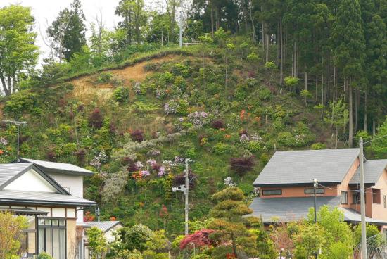 100523 近所の花見山w