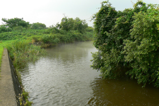 100801 梵字川(堰堤から下、三角地帯の入り口)