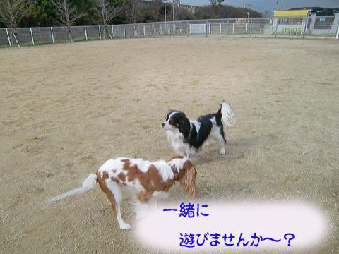 20091215_005.jpg
