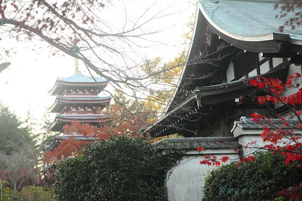 本土寺(47)