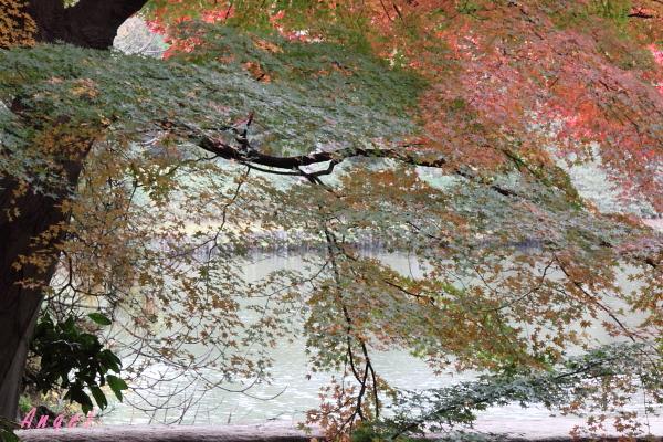 六義園の紅葉シャワー(114)