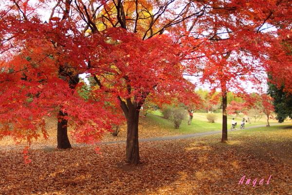 昭和記念公園(68)