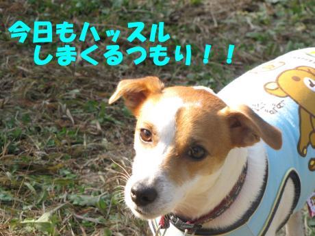 縺・§繧・▲縺・7_convert_20091206213137[1]