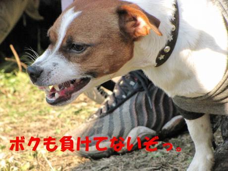 縺後≧縺後≧14_convert_20091208230838[1]