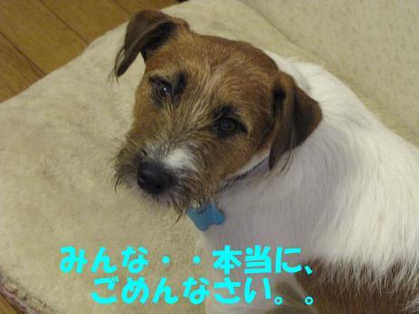 蜈ャ蝨・6_convert_20100109234837[1]