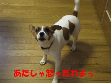 繝ュ繝エ繧」繝ウ3_convert_20100124232257[1]