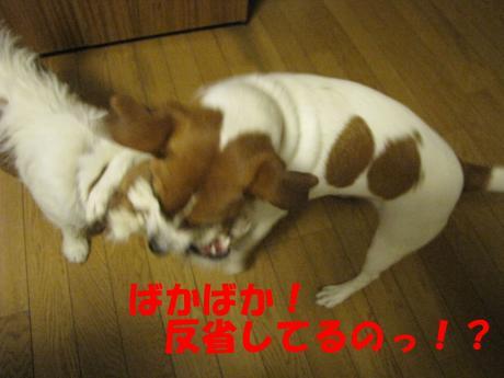 繝ュ繝エ繧」繝ウ4_convert_20100124232321[1]