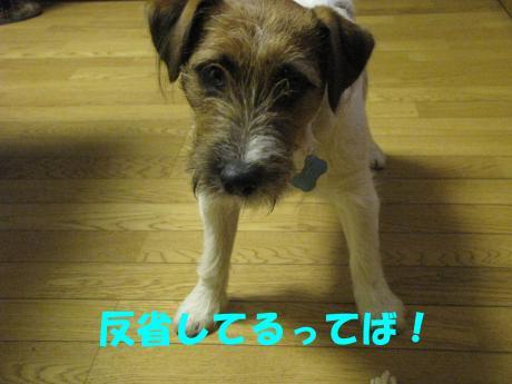 繝ュ繝エ繧」繝ウ5_convert_20100124232434[1]