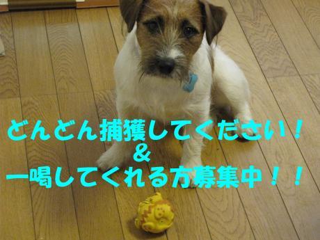 繝ュ繝エ繧」繝ウ9_convert_20100124232602[1]