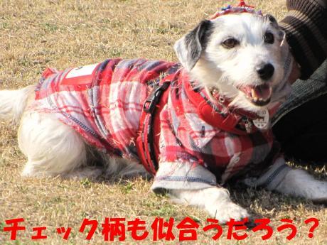 縺・§繧・▲縺・-6_convert_20100131204817[1]