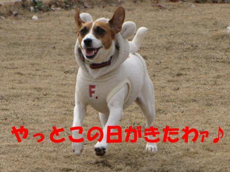 縺・§繧・▲縺・-1_convert_20100131204611[1]