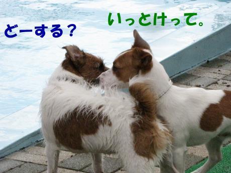 繝励・繝ォ1_convert_20100202233241[1]