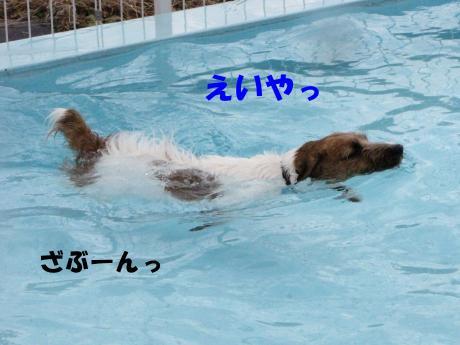 繝励・繝ォ6_convert_20100202233445[1]