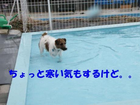 繝励・繝ォ5_convert_20100202233422[1]