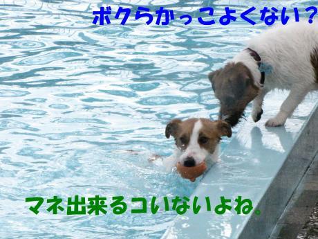 繝励・繝ォ10_convert_20100202233622[1]