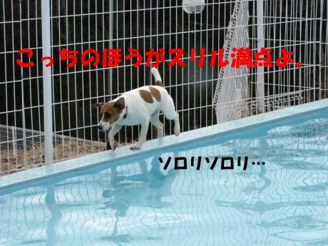 繝励・繝ォ12_convert_20100202233707[1]