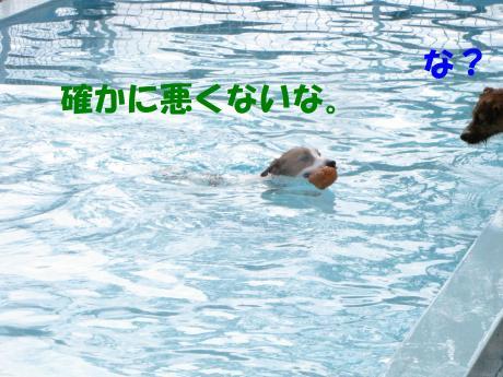 繝励・繝ォ9_convert_20100202233558[1]