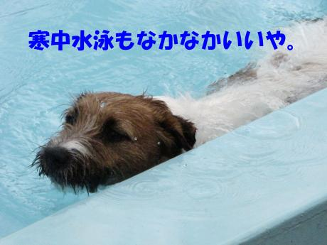 繝励・繝ォ8_convert_20100202233531[1]